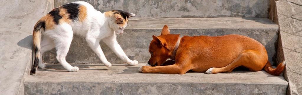 Почему собака в православии нечистое животное